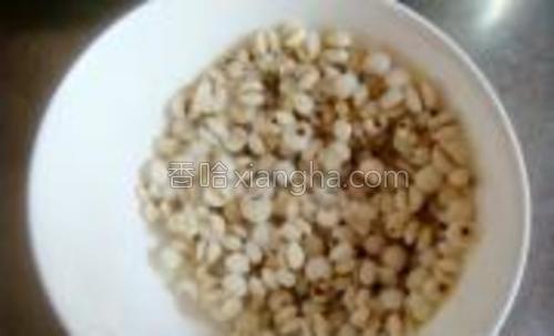 蒸好的薏米滤干水分。