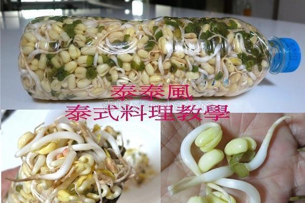 艀豆芽的做法