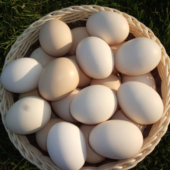 鸡蛋[图]