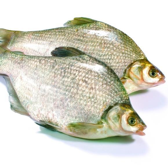 鲂鱼[图]