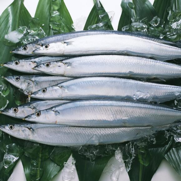 秋刀鱼[图]