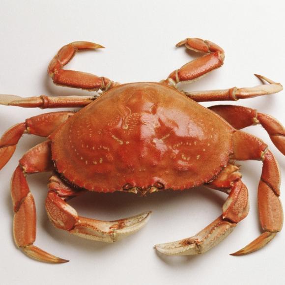 螃蟹[图]