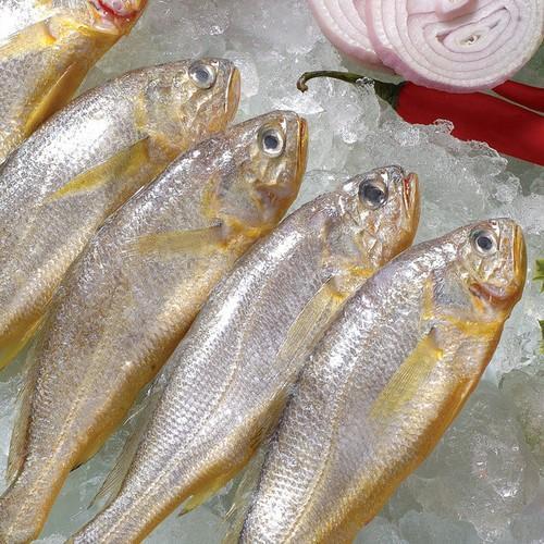 黄鱼[图]