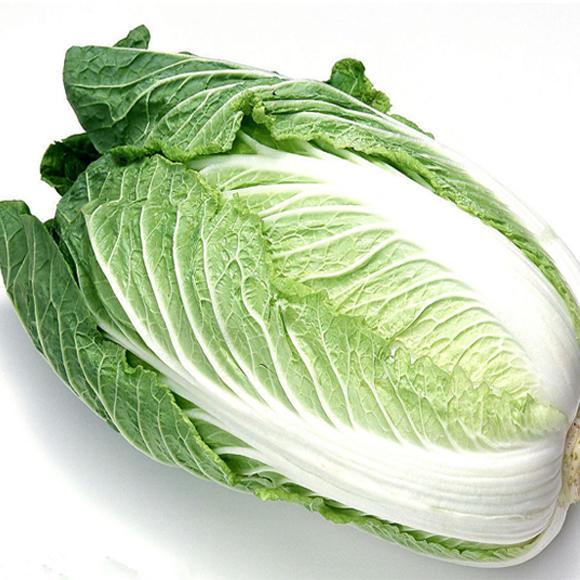 大白菜[图]