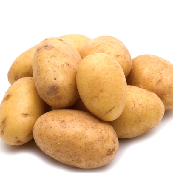 马铃薯[图]