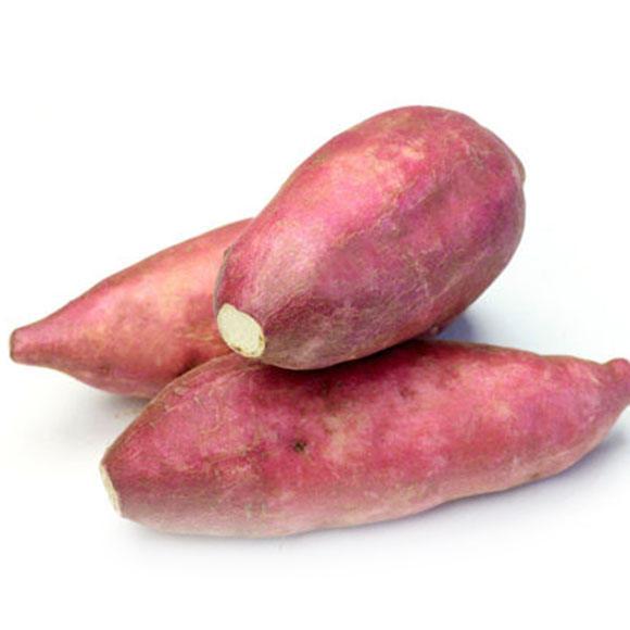 红薯[图]