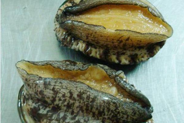 小鲍鱼的大全食谱_小婴儿做好吃-做法-菜谱辅食个月13鲍鱼图片
