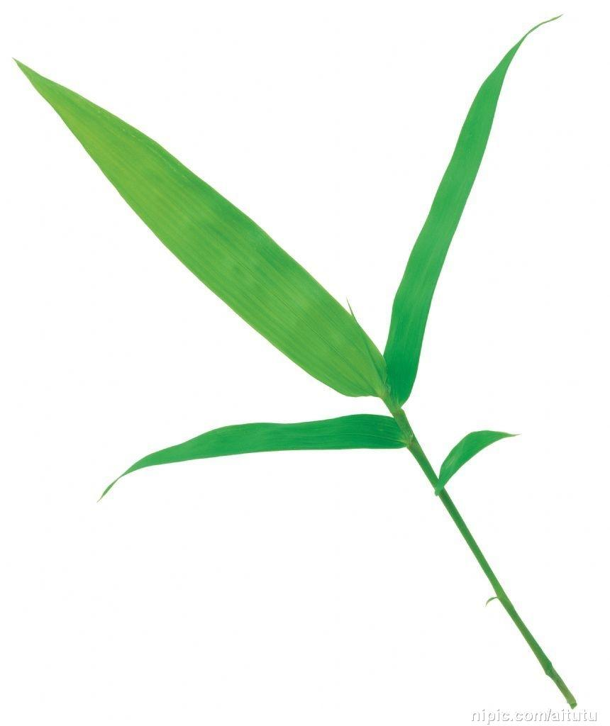 竹叶[图]