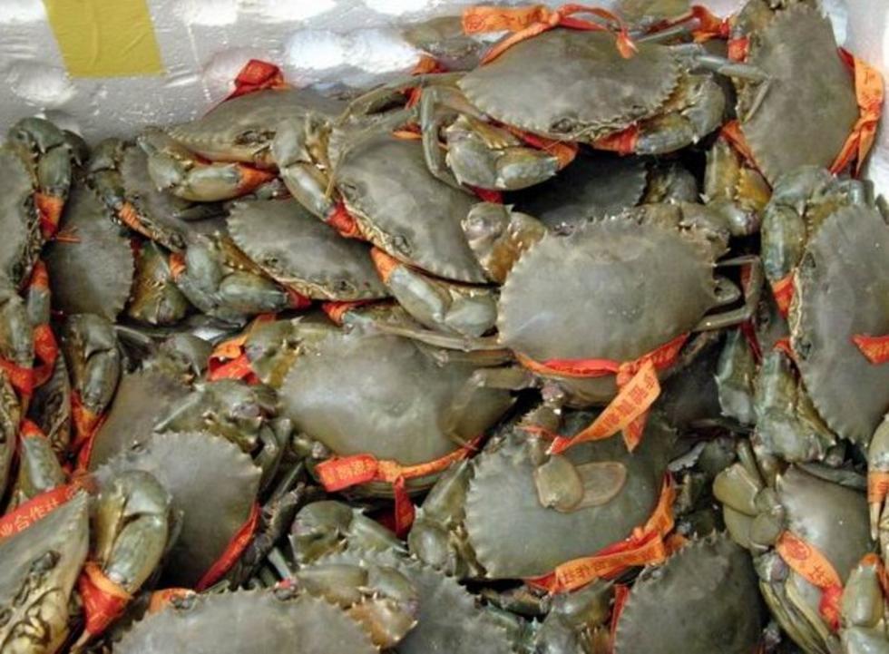 台州三门青蟹