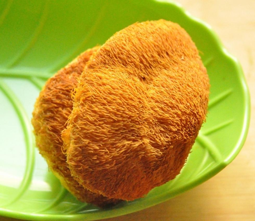 通化猴头蘑