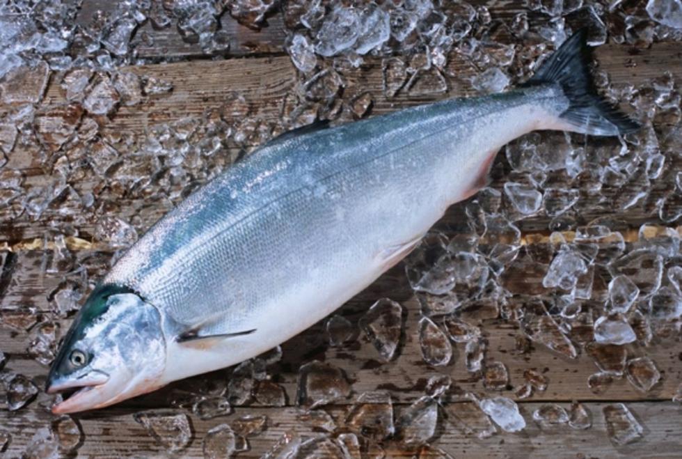 东北雅罗鱼