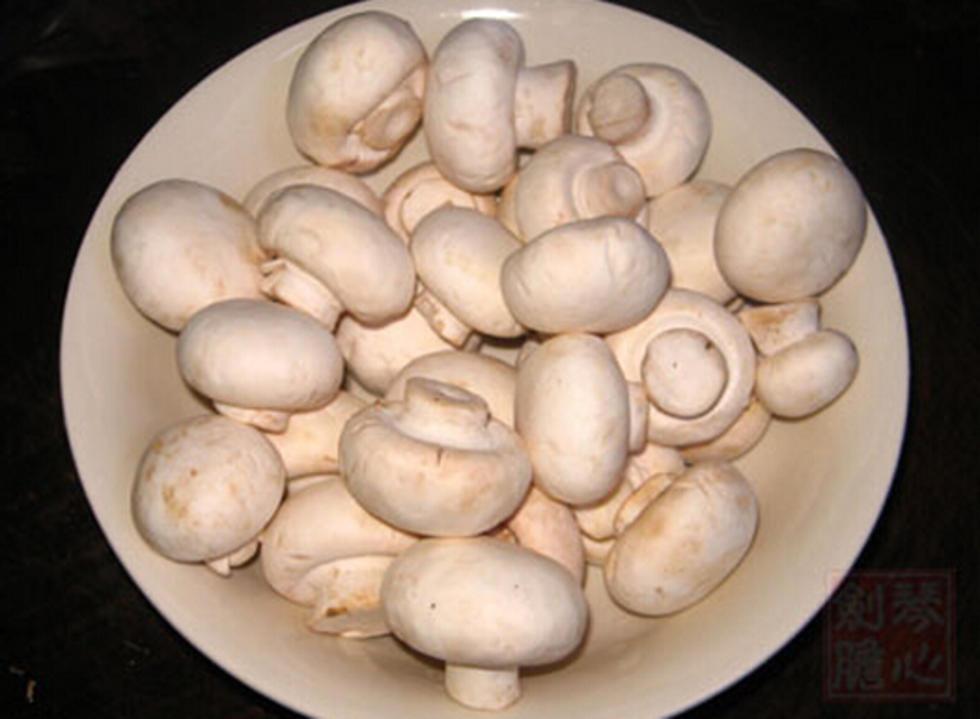 内蒙古口蘑