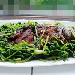 鲫鱼烧香菜的做法[图]