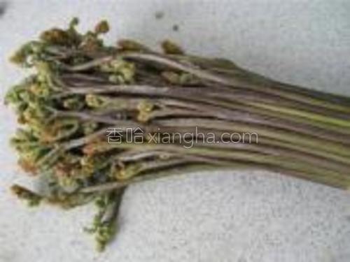 蕨菜摘去老梗,洗净。