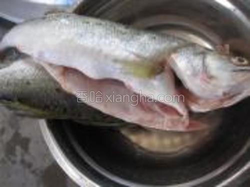 把鱼去掉内脏清洗干净。