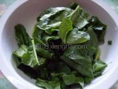 菠菜洗净切段(还是担心,就用清水浸泡了三个小时)。