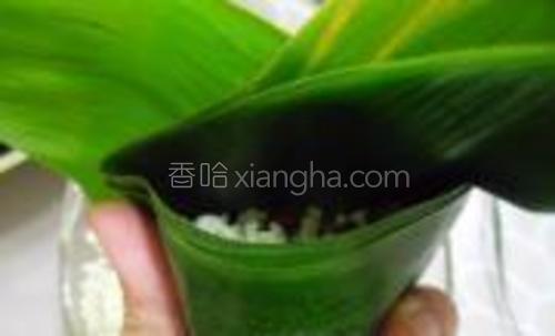 用手指按压粽叶两边,将上面的粽叶折下盖住米料,并用手指按紧两边的粽叶,长出的粽叶反折到边上