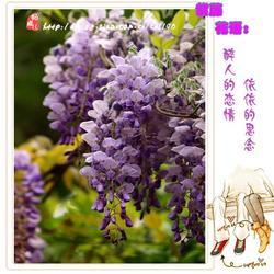 蒸紫藤花的做法[图]