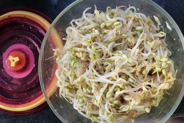 凉拌绿豆芽