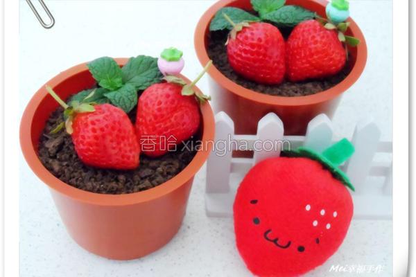草莓盆栽奶酪的做法