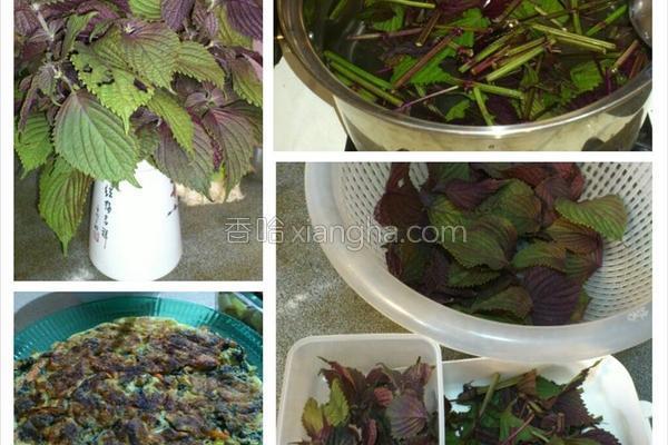 紫苏料理1的做法