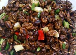 尖椒炒蚕蛹