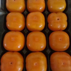 非洲的柿子。[图1]
