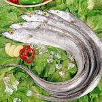 带鱼[图]