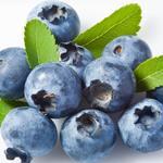 藍莓[圖]